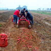 多功能土豆收获机小型地瓜收货机手扶拖拉机土豆收获机