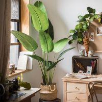 定做【花艺】旅人蕉大型仿真热带植物盆景芭蕉地面空间装饰掬涵造