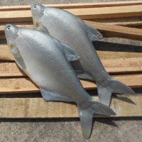 仿真PU鳊鱼 促销道具 蔬菜肉类食品模型批发 市场摆设假鱼道具