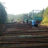 大量批发2米-4米杉木杆 绿化支撑杆