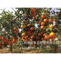 果冻橙什么季节好-润昌果业-高岚乡果冻橙
