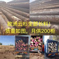 德国金威木业最新进口 欧洲云杉 原木 杉木 实木 板材 月供200柜 木材