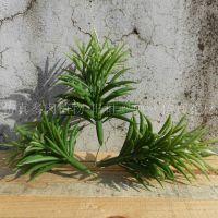 石竹多肉植物 园艺造景植物乡村田园风桌面绿植工程景观假植物