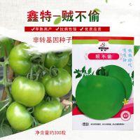 鑫特贼不偷青番茄种子青苹果绿果西红柿约300粒稀有全国均可栽培