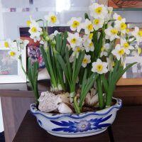 水仙花种球办公室内桌面水培植物水养花卉盆栽风信子百合 花种子
