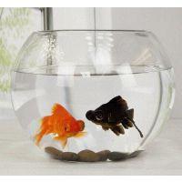 JSH金鱼缸透明玻璃简约办公室创意水培小型鱼缸圆球乌龟裸缸迷你