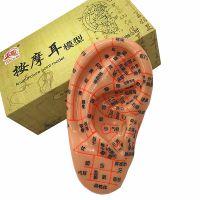 刻字版耳部按摩反射区穴位模型 按摩耳耳贴疗法耳豆耳朵穴位准确