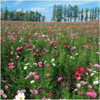 批发野花组合种子,景观花种子,快速生长,草花种子,量大优惠