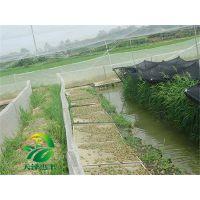 湖北天泽惠丰生态农业发展有限公司:青蛙养殖繁殖技术那家好