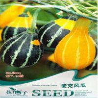 24种南瓜种子任选麦克风瓜种子 葫芦种子 观赏玩具南瓜种 约10粒