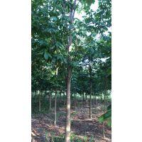 2018年七叶树2-20公分供应情况及价格信息