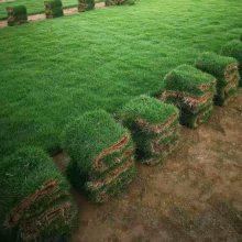 马尼拉草皮 湖南衡阳江河堤坝用的优质草种批发价格 哪里有买