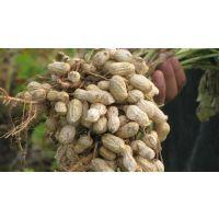 花生种植专用肥 花生用什么肥好