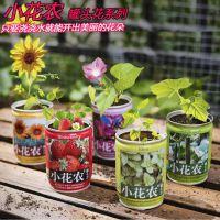 小花农罐头花创意种植花卉种子四季迷你办公室桌面易拉罐装盆栽