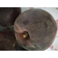 供应新品种桃苗多少钱一棵_黑桃_黑桃甜品种介绍