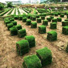 马尼拉草皮 湖南永州水库护坡用的草坪批发价格 哪里有卖的