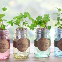 水培创意绿植物室内可爱DIY办公室迷你盆栽儿童可爱微景观