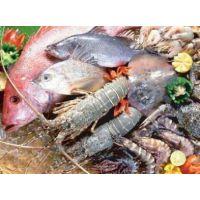 上海龙虾进口清关公司
