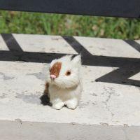 仿真小兔模型桌面橱窗摆件毛绒玩具
