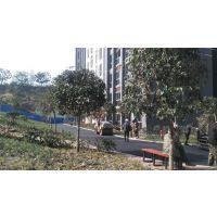 深圳路面铺沥青宝安区铺沥青路面工程公司