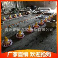自动化养殖水线 料线 畜牧设备批发销售 青州诺德厂家直销