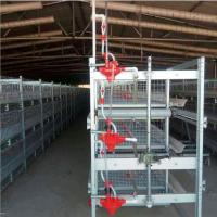 厂家批发 层叠式 肉鸡笼 养殖设备全自动鸡笼 供货全国