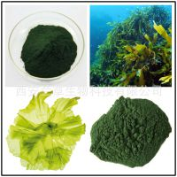 海藻提取物 海藻粉 10:1 海藻多糖 多比例供应 兰草生物现货