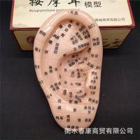 超清晰17厘米大耳朵耳部按摩反射区穴位模型刻字穴位准确大号耳模