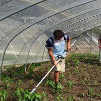 富民牌果园耕地除草机 背负式割草机视频汽油旋耕翻土机