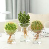组合多肉植物仙人掌盆栽仙人球盆栽开花植物办公室小盆栽水培植物