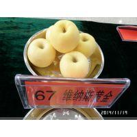 维纳斯黄金苹果怎么卖 苹果苗产地 种植技术