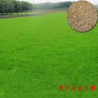 宁波高羊茅草皮产地报价