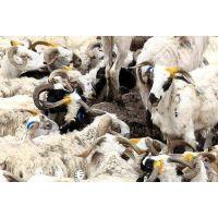进口澳洲羊毛在青岛港怎么报关清关呢