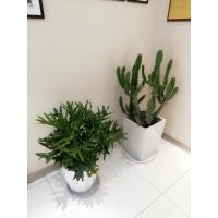 佳林园艺专业提供福田租花,办公室绿植租摆,室内绿化租赁