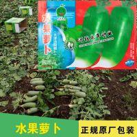 水果萝卜种子 天津特产正宗沙沃萝卜沙窝水果青萝卜甜脆可口