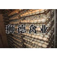 湖南湘潭鹅苗出售 麻羽高产绿壳蛋鸡苗 南宁乌鸡苗批发市场