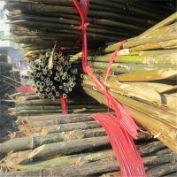 大量批发2.5米西红柿竹条(图)