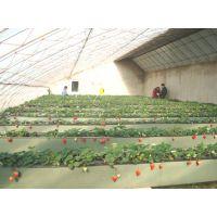 咨询无土栽培草莓种植适合用什么类型温室大棚/薄膜无土栽培草莓温室效益