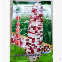 中品彩甜糯玉米种子 甜玉米糯玉米种子 甜糯比3:1 又甜又糯 好吃