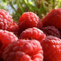 红树莓浓缩汁