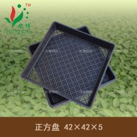 【农博筛网】42×42×5厘米/正方盘/长方盘/平底育苗盘/穴盘