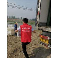 龙虾苗养殖培训