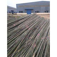 产地竹子批发