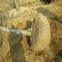 浙江宁波批量销售树根网,防护网,土球围栏