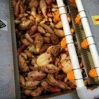 1500型红薯去皮机 根茎类植物去皮清洗一体机 山东富扬制造