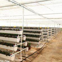 草莓立体栽培槽种植槽高架育苗槽一亩成本大概需要多少