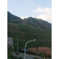 铜仁山坡绿化常用的草种草籽灌木种子