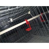 直销 高强度鸡笼雏鸡,肉鸡笼 高质量自动锁门双门开鸡笼