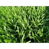 人造草坪材料批发 草坪施工