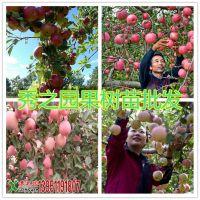 批发早熟品种苹果树苗 红富士苹果苗 富士苹果树苗  嫁接果树苗